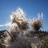 осенний цветок :: Nikolay