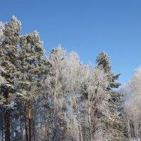 Кружевье в лесопарке :: Наталья Золотых-Сибирская
