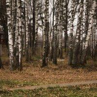 Облетели листья...... :: Виктор Филиппов