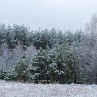 Зима одевает в серебро. :: Николай Масляев