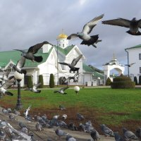 Городские голуби! :: Ирина Олехнович