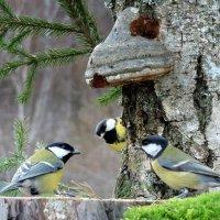 Соображают на троих , ведь сегодня праздник их !!!!!!! :: Hаталья Беклова