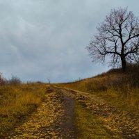 Осенние пейзажи :: iojik48 iojik48