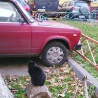 Любит котик яркие цвета... :: Ольга Кривых