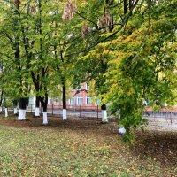 Аллея перед школой № 9 Армавир :: Бронислав Богачевский