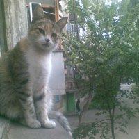 Сударь, изволите-с чем-то угостить? :: Oleg Litvinov