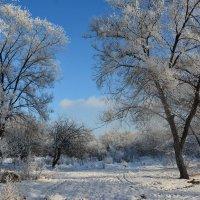 Зимний парк :: юрий Амосов