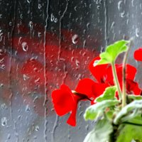 Ноябрь за окном... :: Тамара (st.tamara)