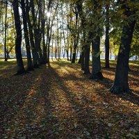 В кремлевском парке осенью (этюд 6) :: Константин Жирнов
