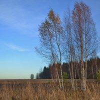 ноябрь :: Светлана