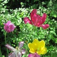 Такие разные тюльпаны :: Дмитрий Никитин