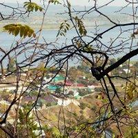 вид с горы на Волгу :: Екатерина Чурина