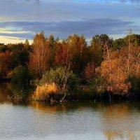 У лесного озерца :: Вячеслав Минаев