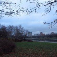 Ноябрь обыкновенный. Темнеет рано (уже днем; почти вчера) :: Андрей Лукьянов