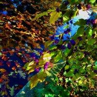 Осенняя симфония :: Nina Yudicheva