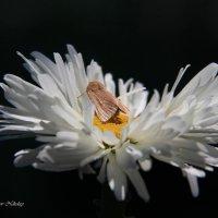 Кроватка для бабочки :: Николай Волков