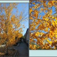 Осень... :: Нина Бутко