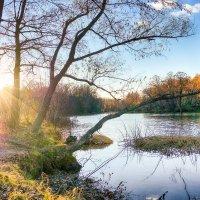 Осенний пейзаж. :: Александр Селезнев