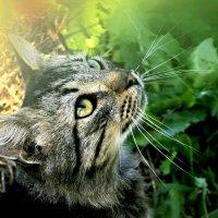 Летний кот :: Татьяна Черёмухина