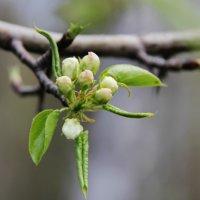 Весна :: Helga Shiryaeva