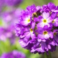 Цветок :: Александр Менщиков