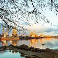 Выборгский порт :: Надежда Василисина