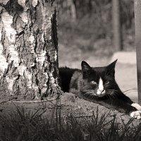 Котик :: Larisa Oparina