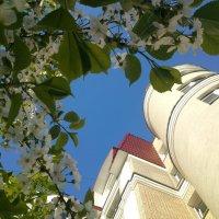 Весна в центре города :: Maria Milova