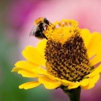 Сбор нектара :: Victoria Bryfar