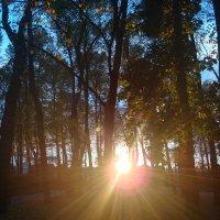 Лучи солнца :: Оля Фадеева