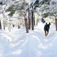 Зима :: Polina Semchenko
