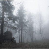 туман в БЕЛОКУРИХЕ 3 :: Дмитрий Филиппов