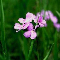 цветы :: Катя Медведева