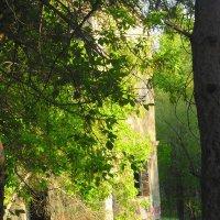 таинственные развалины :: Люба Гительман