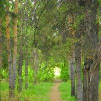 лес :: Люба Гительман