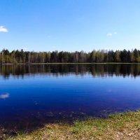 Лесное озерцо... :: Дмитрий Янтарев
