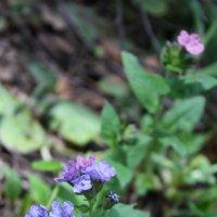 Цветы в лесу :: Ольга Курохтина