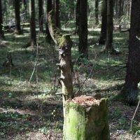 Трон лесного царя :: Ольга Курохтина