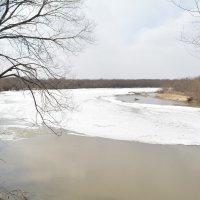 Река Раздольная (Сейфун) в районе с. Утесное :: Елена Ткаченко