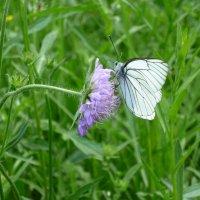 Бабочка :: Dmitriy Grigoryev