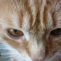 Cat :: Dmitriy Grigoryev