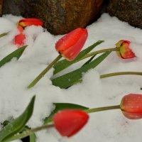 Май в Сибири :: Жанна Мальцева