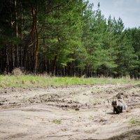 Муся на прогулке в лесу) :: Seda Yegiazaryan