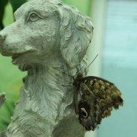 Бабочка :: игорь мартынюк
