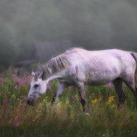 В тумане :: Анна Корсакова