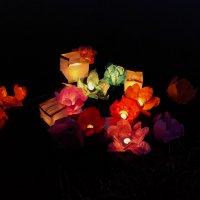 Живые бумажные цветы :: Евгения Платонова
