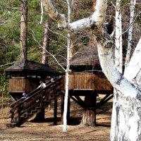 Дом на дереве :: Оксана Тарасенко