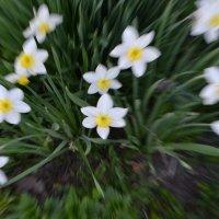 Один раз в год, сады цветут... :: Рената ***