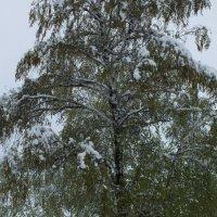 Зима нагрянула в мае :: Константин Гибельгаус