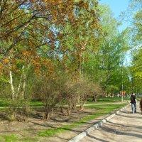 парк Дубки :: Наталья Елизарова